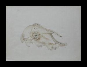 skull_goat-SOLD